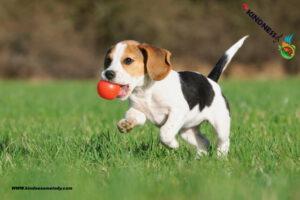 رژیم غذایی سالم برای توله سگ