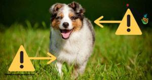 رژیم غذایی سالم و ورزش توله سگ