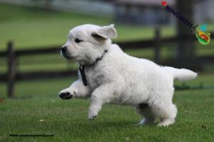 ورزش برای توله سگ