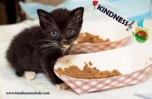 بهترین غذا برای بچه گربه، غذای خشک است یا مرطوب؟