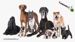 دلایل عقیم سازی حیوانات خانگی