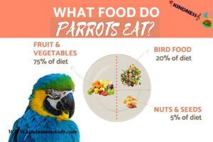 طوطی ها چه می خورند
