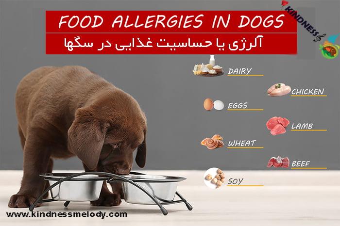 انواع آلرژی غذایی در سگهای خانگی
